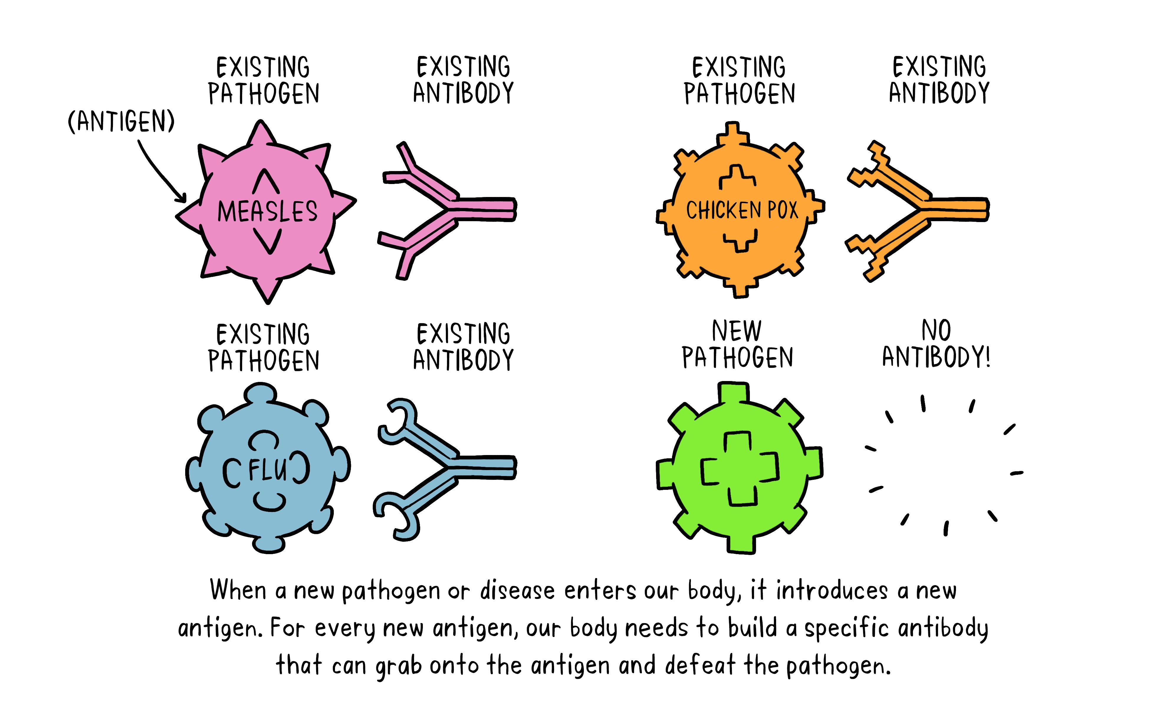 Vaccines antibody